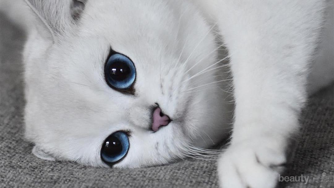Mau Kasih Kado Pacar Antimainstream 5 Jenis Kucing Lucu Ini Bisa Jadi Inspirasi Kamu