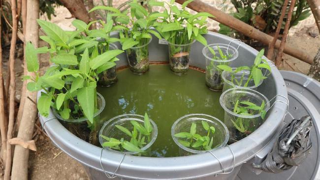 Tips Menanam Kangkung Dan Ikan Lele Dalam Ember Cocok Di Lahan Terbatas