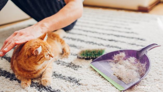 Penyebab Bulu Kucing Rontok Yuk Ketahui