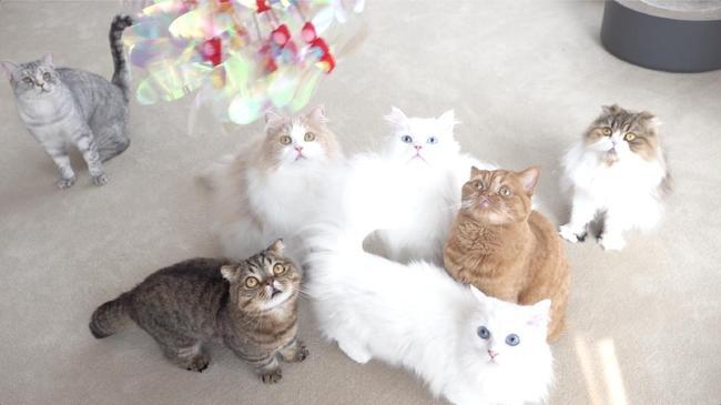 Intip 10 Kucing Lucu Dan Menggemaskan Di Channel Youtube Kittisaurus