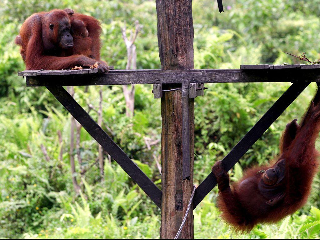 Foto: Aneka Tempat Wisata di Ibu Kota Baru Kutai Kartanegara