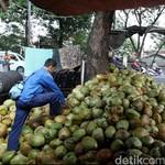 RI Masih Impor Kelapa untuk Kebutuhan Industri