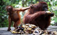 Bangga! Indonesia Peringkat ke-6 Negara Terindah di Dunia
