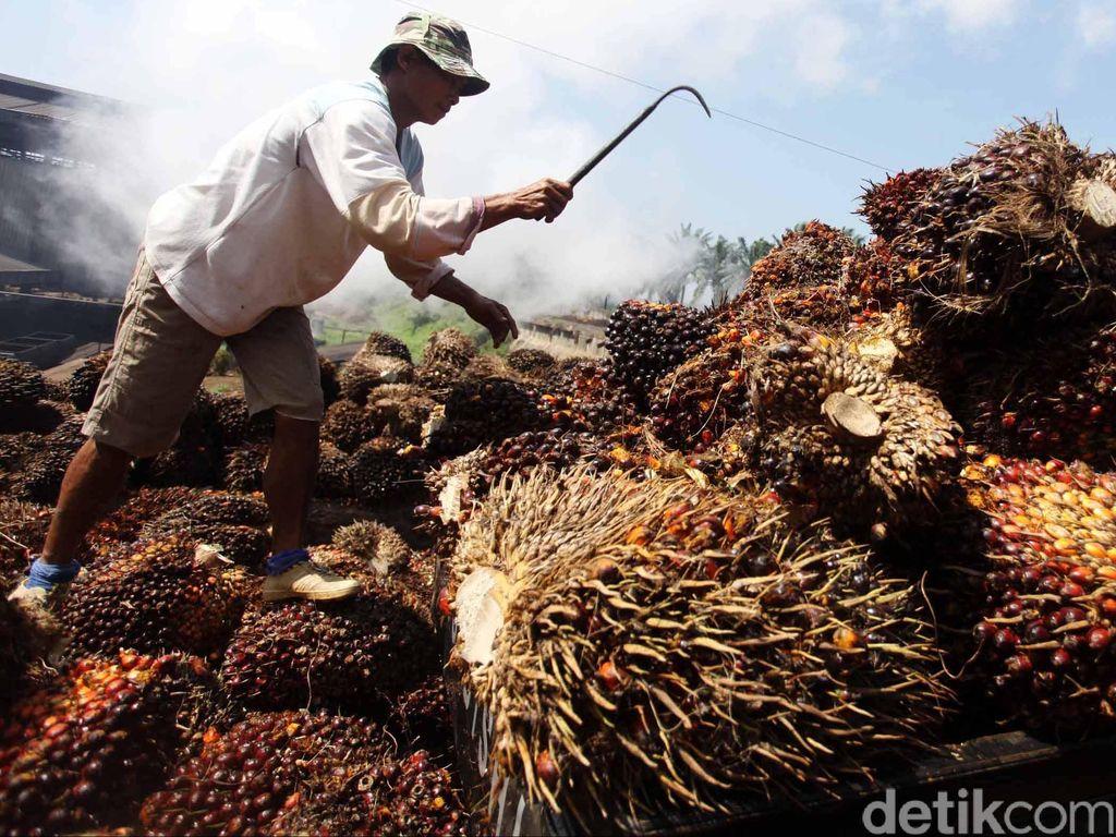 Terancam Kelaparan, Petani dan Buruh Sawit Minta Bantuan Sembako