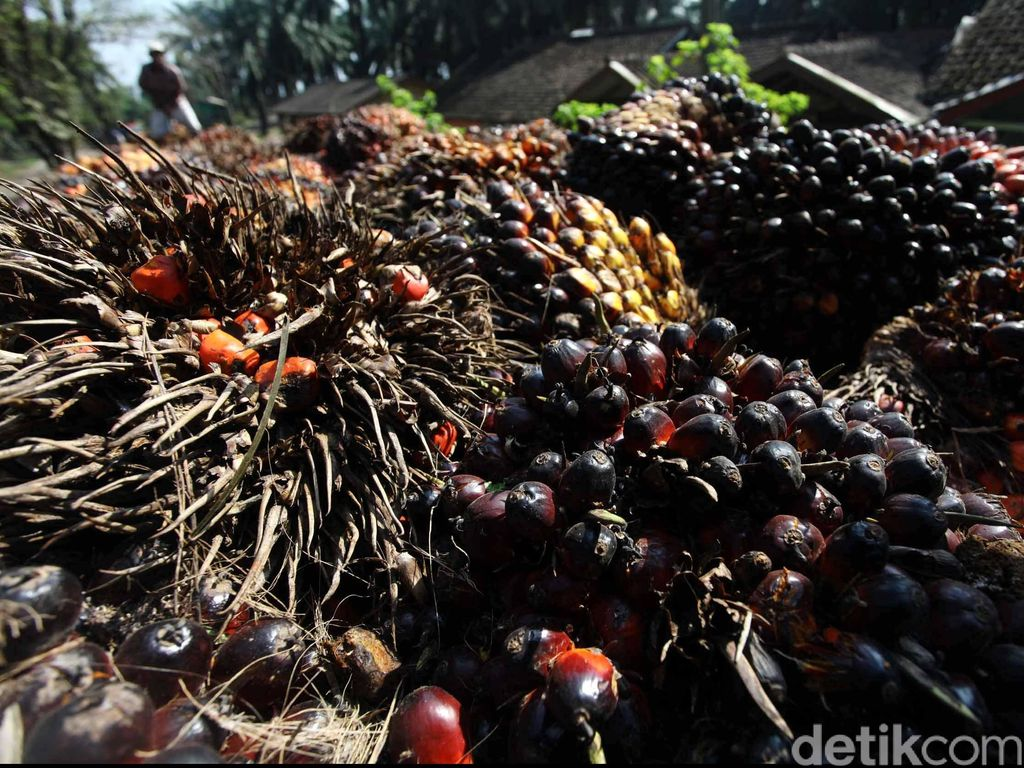Gegara Corona, Permintaan Ekspor Kelapa Sawit ke India Turun 2 Juta Ton