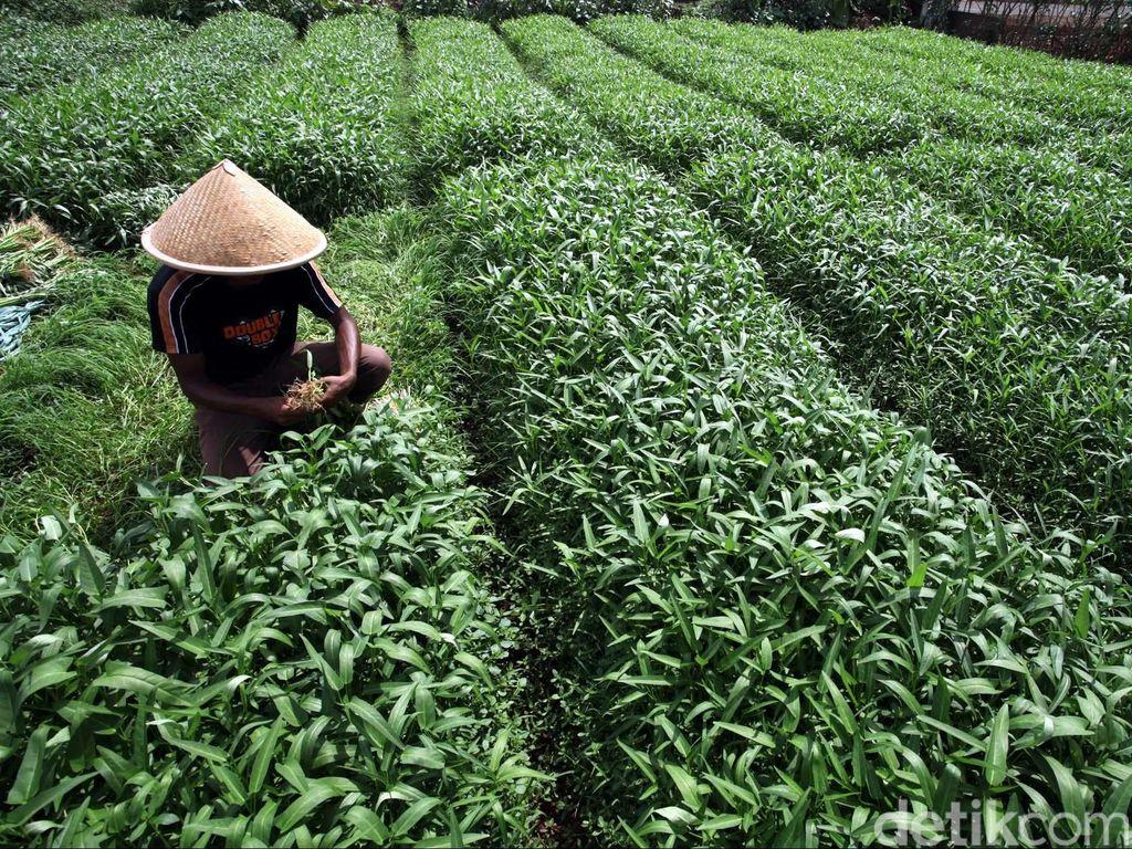 Hari Tani Nasional, Petani Kini Bisa Lebih Gampang Jual Produk ke Masyarakat
