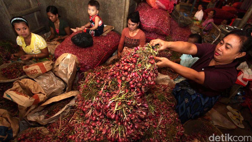 Meski Lebih Murah, Petani Bawang Merah Enggan Pakai Benih Biji