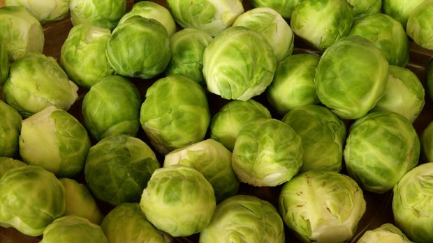 Ilustrasi brussels sprout