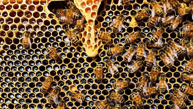 Ilustrasi Sarang Lebah