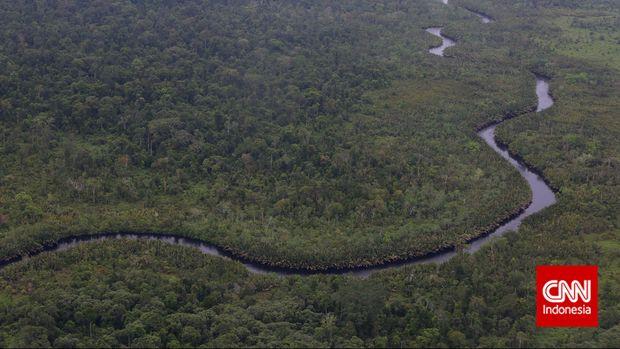 Hutan lindung dan taman nasional Tanjung Puting dilihat dari atas pesawat, Pangkalan Bun, Kalimantan Tengah, Kamis, 1 Januari 2015. CNN Indonesia/Safir Makki