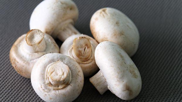 Ilustrasi jamur champignon