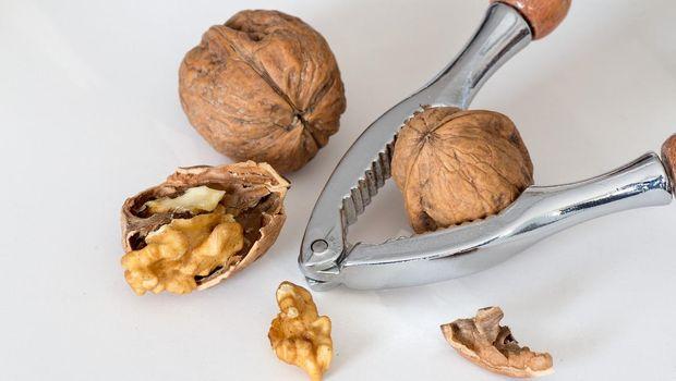 Ilustrasi kacang walnut