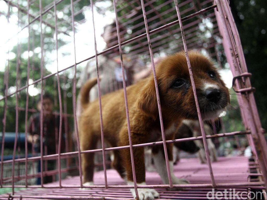 Diminta Anies, Dinas KPKP DKI: Tak Ada Razia Anjing dan Kucing Hari Ini