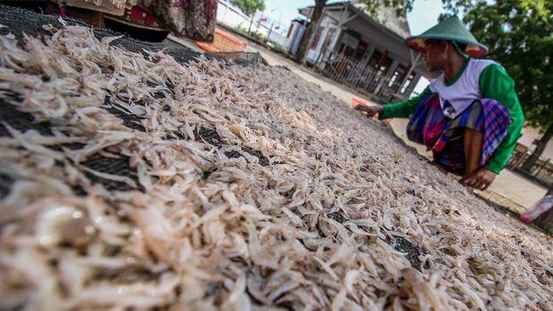 Pekerja menjemur udang Rebon (Acetes) di kawasan pantai Lekok, Pasuruan, Jawa Timur, Selasa (5/5). Udang tersebut selanjutnya dipasarkan ke Sidoarjo, Surabaya, Solo dan Jakarta dengan harga Rp6 ribu rupiah per kilogram dalam kondisi basah dan Rp17-20 ribu rupiah dalam kondisi kering. ANTARA FOTO/Moch Asim/zk/ss/pd/15