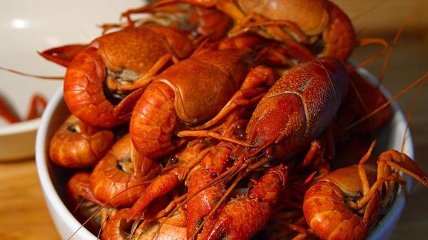 Ilustrasi lobster