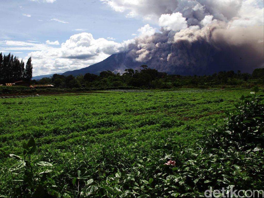 Erupsi Gunung Sinabung, Wisatawan Diimbau Tidak Beraktivitas di Dekat Puncak