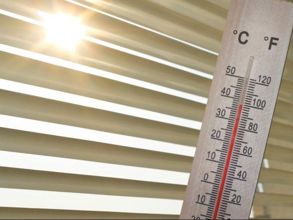 Pekanbaru Panas Menyengat hingga 35 Derajat Celsius, Ini Pemicunya