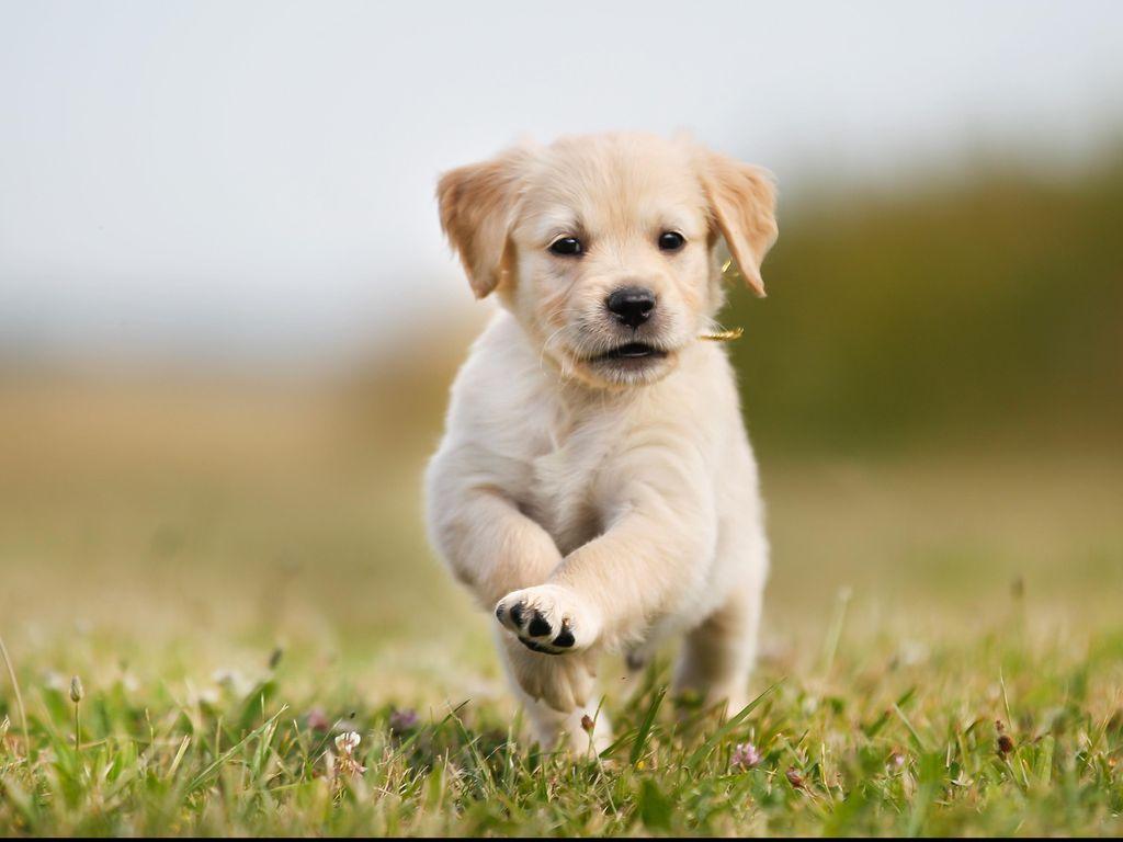 Selundupkan Heroin di Perut Anak Anjing, Dokter Hewan Dibui 6 Tahun