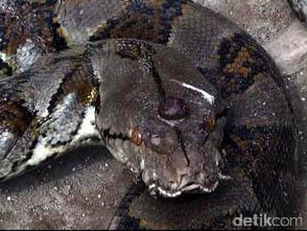 Ular dalam Mitologi Jawa: Dewa Underworld, Menolong via Gorong-gorong