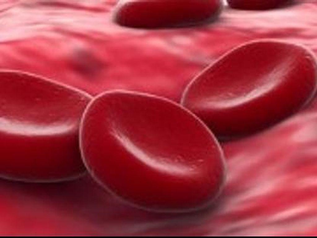 Bahan Baku untuk Penghasil Sel Darah Merah Akan Diproduksi di Indonesia