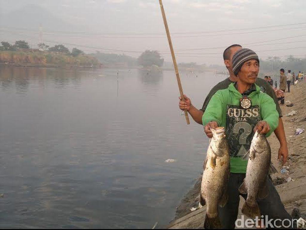 Penjelasan Badan Karantina soal Fenomena Ikan Mabuk