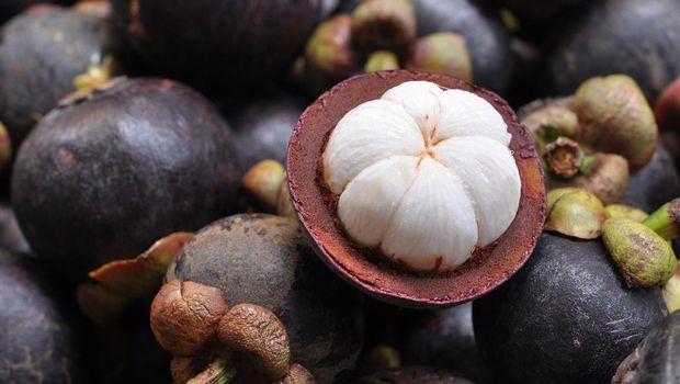 Ilustrasi buah manggis