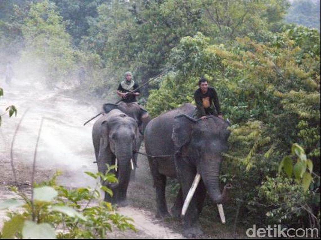 Pembantai Gajah Liar Sumatera di Riau Divonis 2 Tahun 6 Bulan Penjara