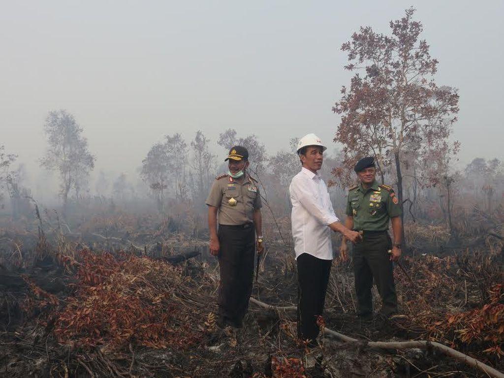 Pasal Sakti Penjerat Pembakar Hutan Dihapus di Omnibus Law, Walhi: Konyol!
