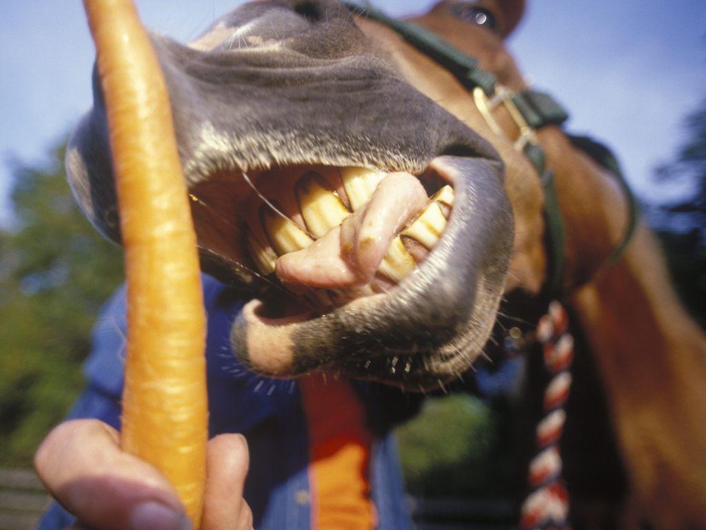 Tak Bisa Berhenti Masturbasi di Depan Kuda, Pria Ini Ditangkap Polisi