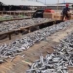 Target KUR Tahun Ini Rp 110 T, 40% untuk Pertanian dan Perikanan