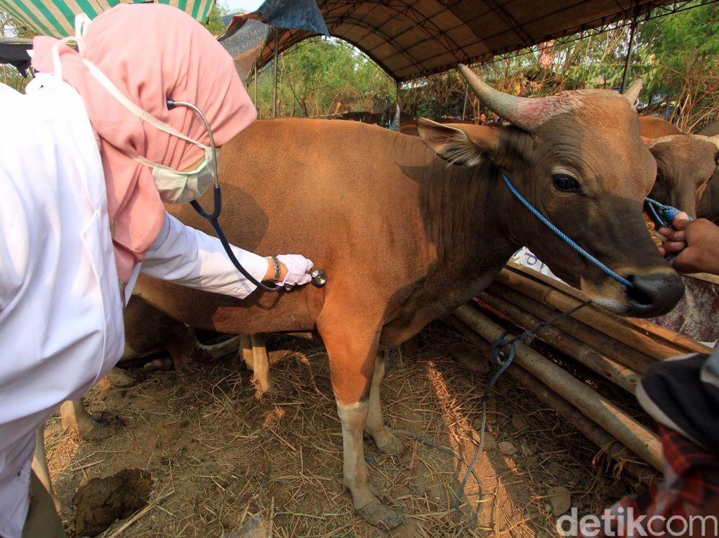 5 Penyakit Berpotensi Wabah di Indonesia yang Ditularkan dari Hewan