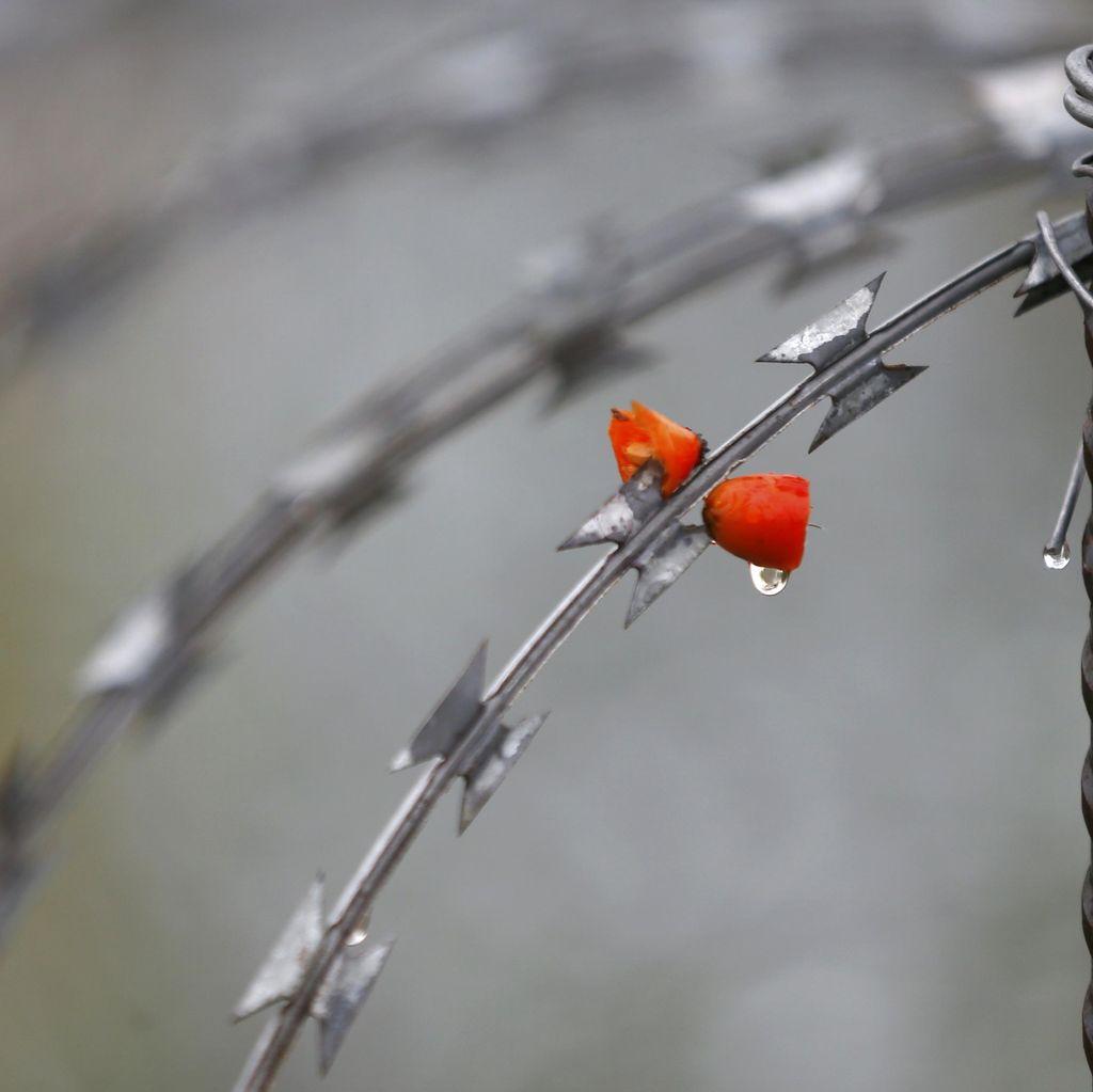 Uni Eropa Minta Negara Anggota Kembalikan Pencari Suaka ke Yunani