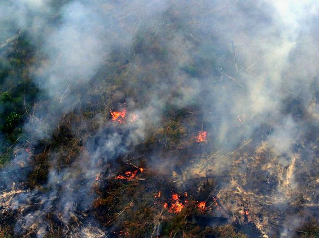 Sidang Kasus Kebakaran Lahan, PT LIH Disebut Rusak Lingkungan Senilai Rp 192 M