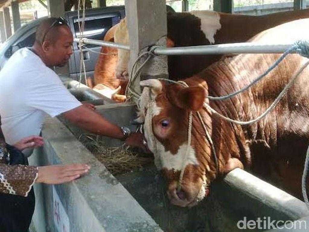Protes Impor Daging Kerbau India, Asosiasi Peternak Surati Pemerintah