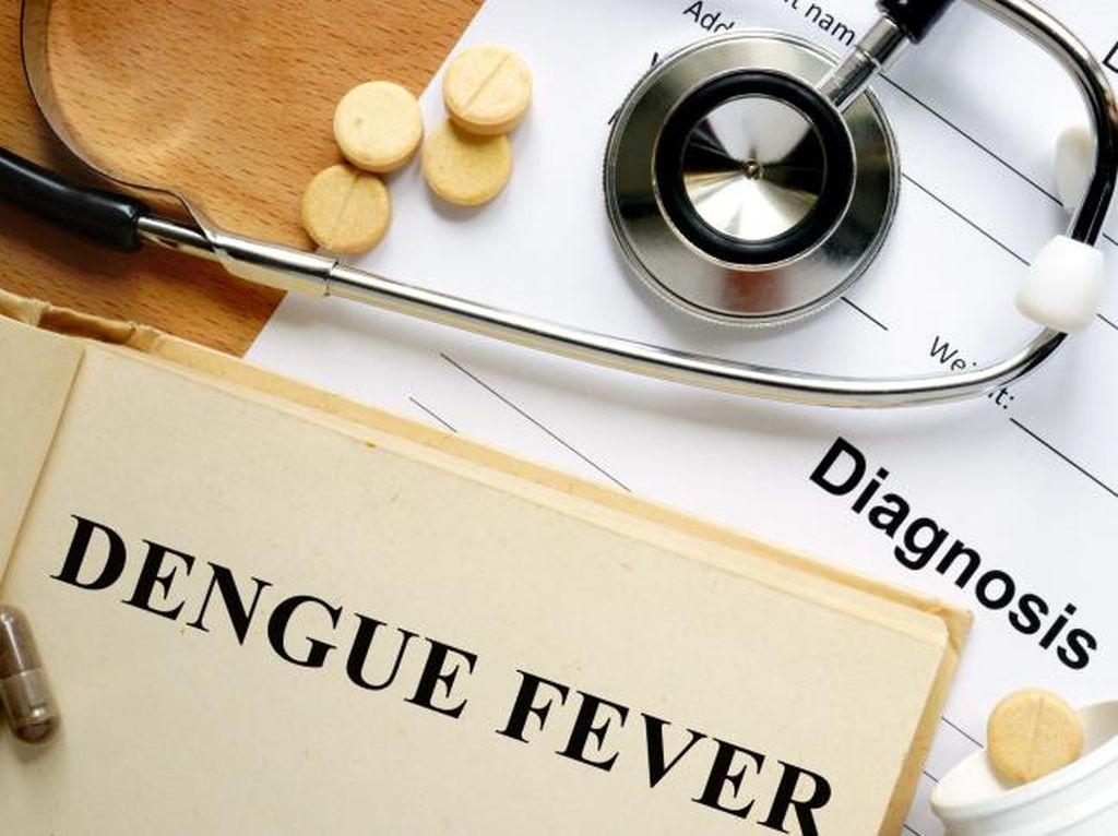 Demam Berdarah atau DBD: Gejala, Obat, dan Pencegahan