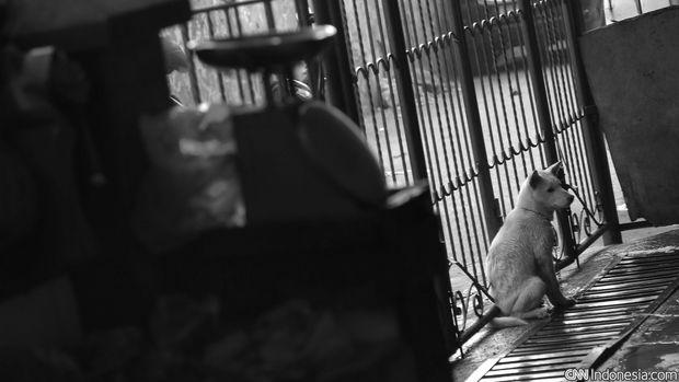 Seekor anjing berkeliaran, di rumah potong anjing dan babi di kawasan Jakarta Timur, Kamis, 1 Oktober 2015. Sejumlah kelompok pecinta hewan mendesak Gubernur DKI Jakarta Basuki Tjahaja Purnama (ahok) segera melarang peredaran daging anjing untuk dimakan. setalah Ahok menegaskan dirinya tidak perlu mengeluarkan Peraturan Gubernur (Pergub) untuk mengurus peredaran daging anjing di Jakarta. CNN Indonesia/Adhi Wicaksono.