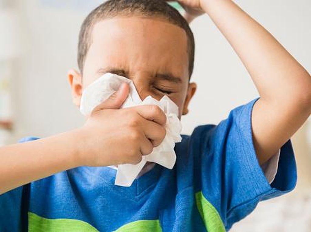 Wabah Flu Babi di India, Lebih dari 1.000 Orang Meninggal Dunia