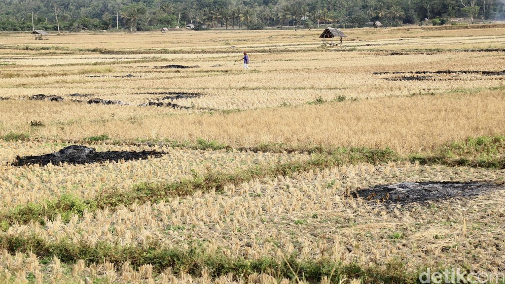 Ini Jurus Kementan dan FAO Agar Lahan Kering Bisa Digarap Petani