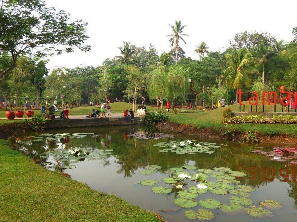 Foto: Tabebuya Sudah Ada di Taman Jagakarsa
