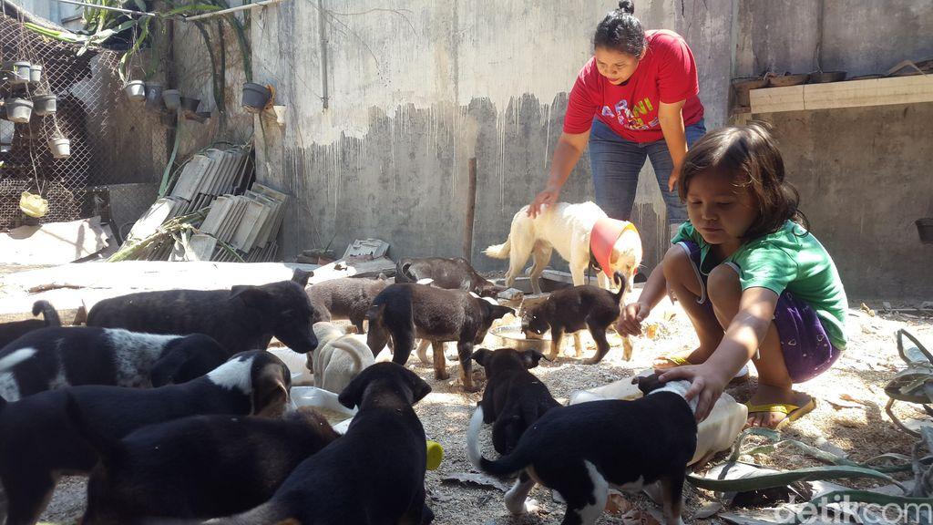 Kisah Dua Bersaudara Selamatkan Puluhan Anjing Terlantar di Banyuwangi