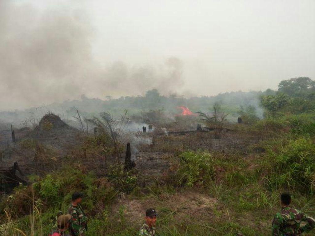 Polres Pelalawan Temukan Aktivitas Ilegal Logging di Taman Nasional