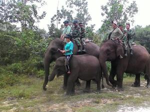 Tim Kostrad Patroli Kebakaran di Riau dengan Naik Gajah