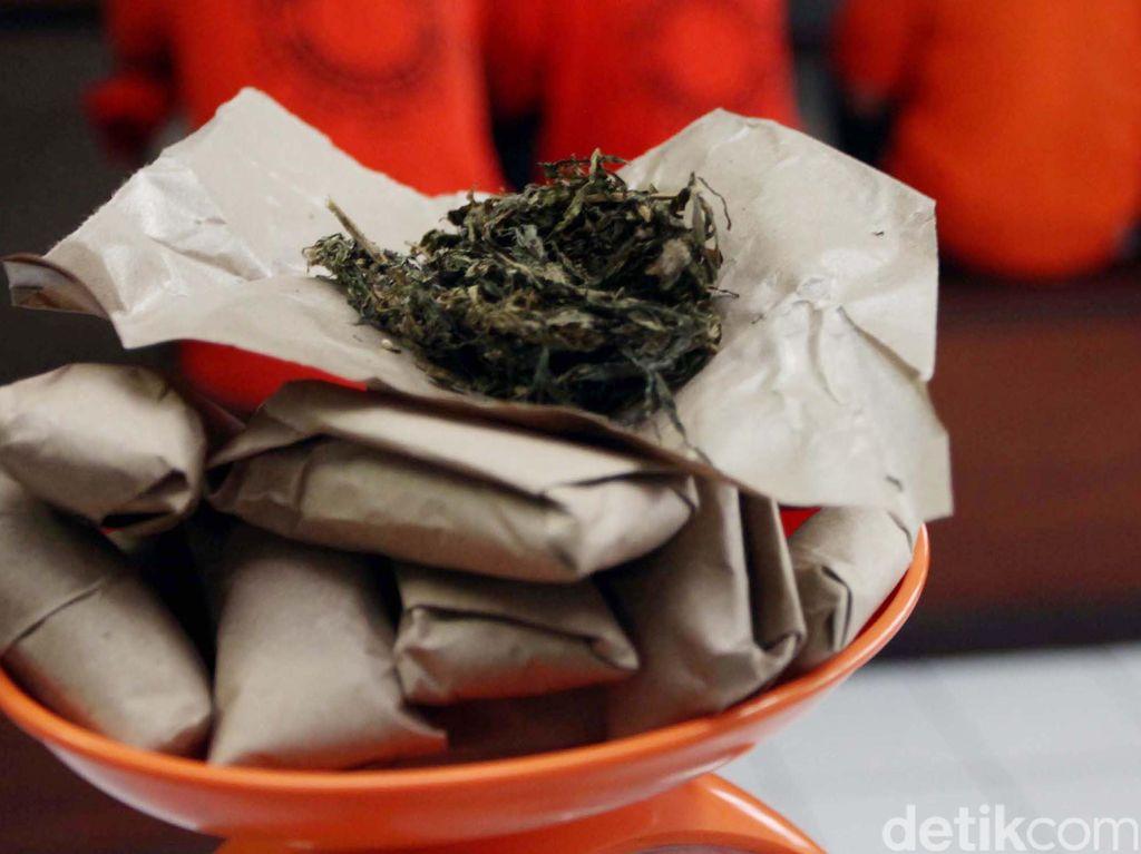 BNN Tangkap 5 Orang Terkait Narkoba di Medan, 141 Kg Ganja Disita