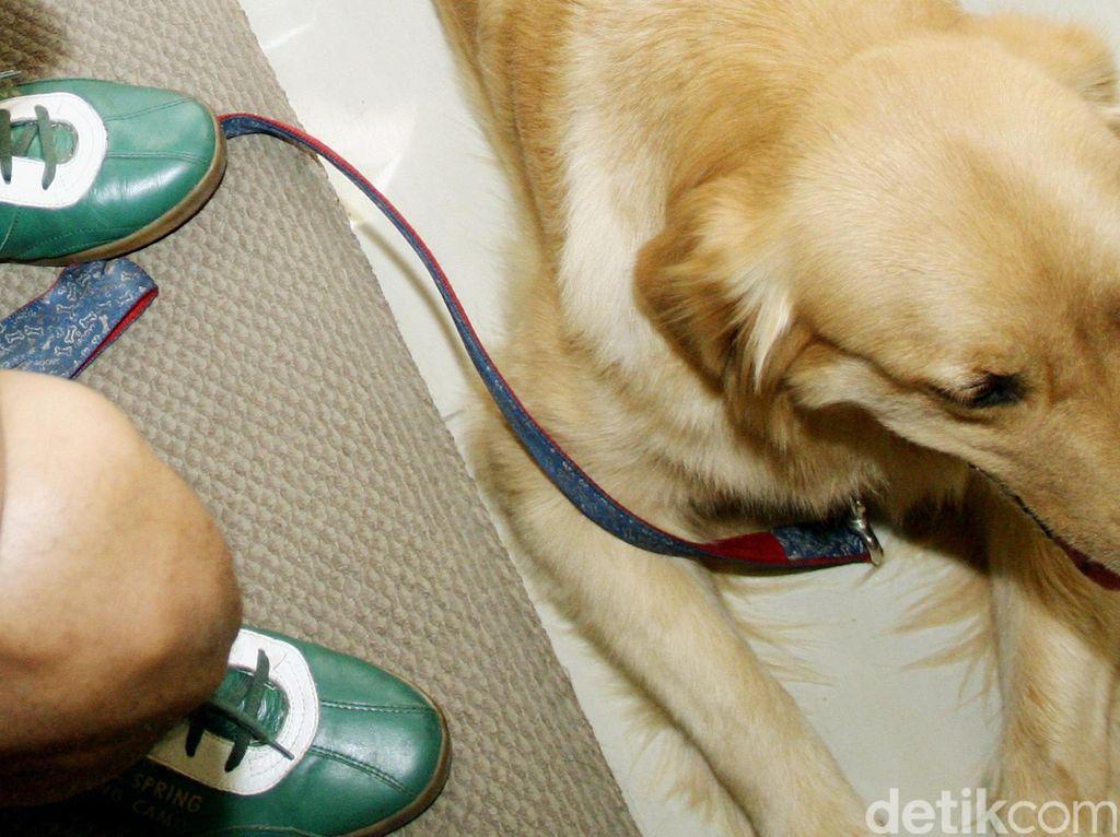 Hancur Hati Pemilik Anjing Golden Retriever Diracun hingga Mati Lalu Dicuri