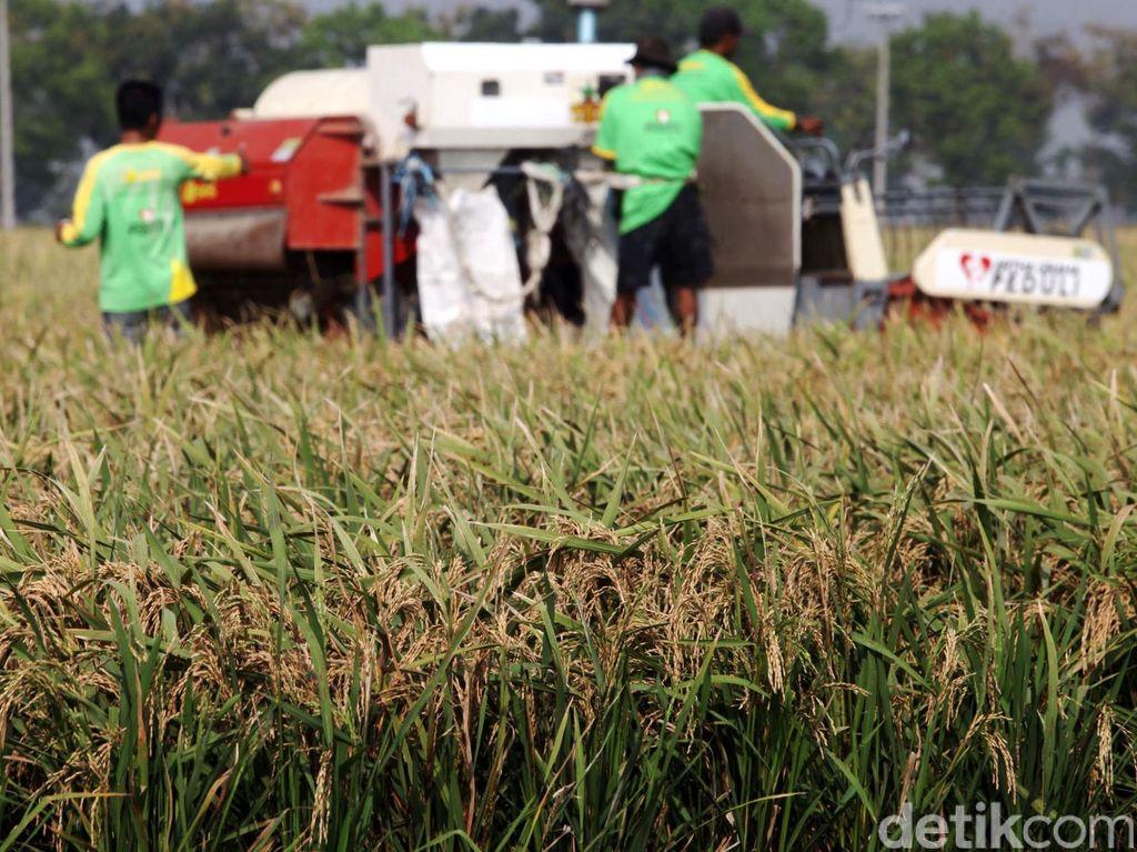 Investasi Melejit, Ekspor Pertanian Sumatera Utara Naik
