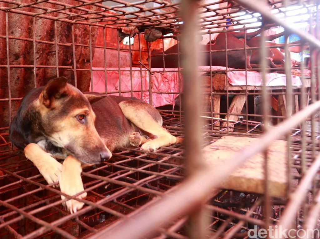 Penganiayaan Anjing di Bali, Ada Mitos Daging Anjing Lebih Enak Jika Dipukuli