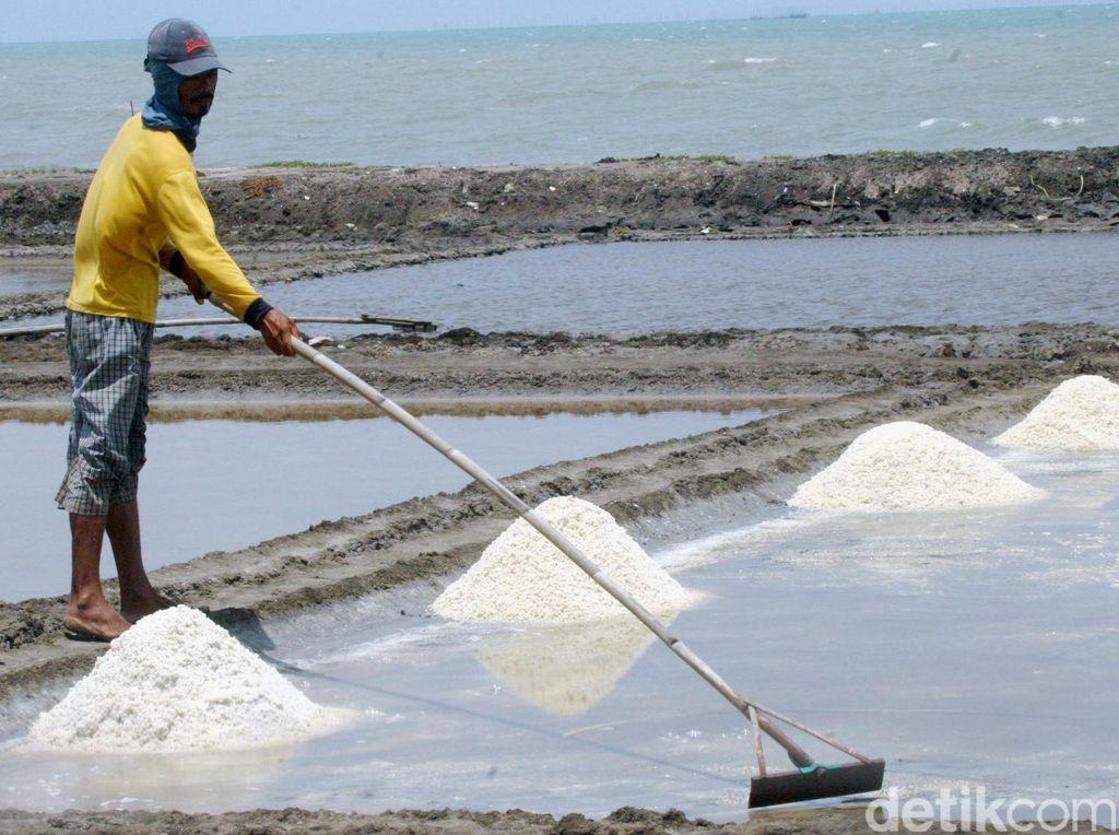 Petani Jepara Mengadu ke Susi, Garam Dibeli Tengkulak Hanya Rp 300/Kg
