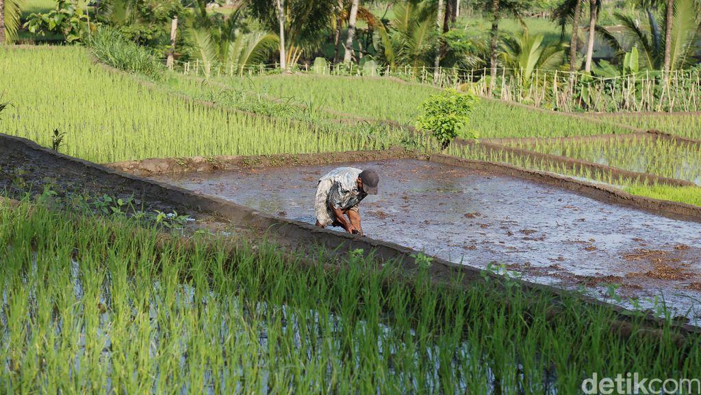 Petani akan Dapat Kartu Khusus untuk Beli Pupuk Subsidi