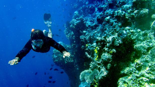 Penyelam berenang di antara terumbu karang taman laut Bunaken di Teluk Manado, Sulawesi Utara, Sabtu (5/12). Taman laut Bunaken memiliki biodiversitas kelautan salah satu yang tertinggi di dunia, hal itu merupakan daya tarik bagi wisatawan khususnya wisata air dengan 20 titik penyelaman hingga kedalaman 1.344 meter.  ANTARA FOTO/Yudhi Mahatma/pd/15