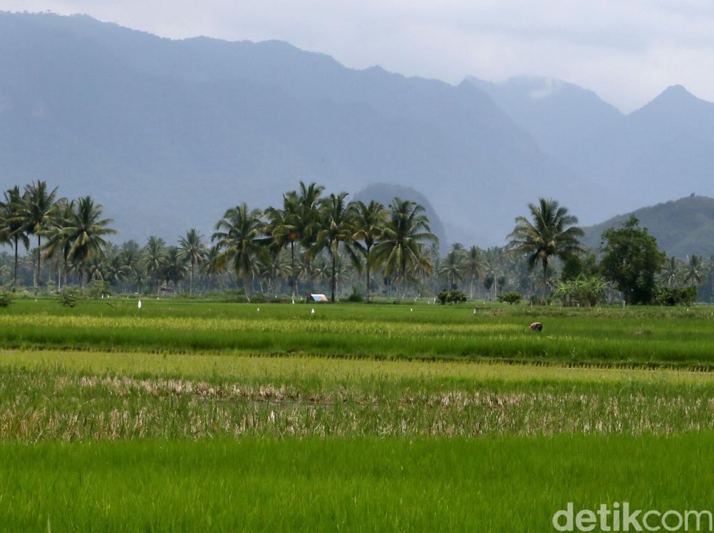 Rincian Data Lahan Pertanian Karawang Nihil, DPRD Kritisi Kinerja BPS